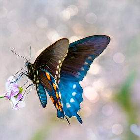 Butterfly Bokeh by Bill Tiepelman - Digital Art Animals ( lights, butterfly, macro, insect, bokeh, flower )
