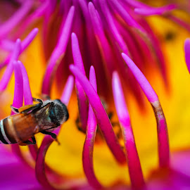 Carefully Does It by Stuart Lilley - Animals Insects & Spiders ( macro, flowers, insects, insect, flower,  )