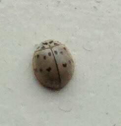 Tiny Grey Bug