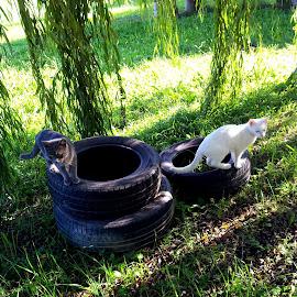 by Katarina Papic - Animals - Cats Playing