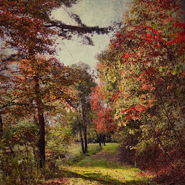 A Scenic Walk by Vivian Gordon - Landscapes Prairies, Meadows & Fields ( vigor, nature, autumn, fall, trees, landscape, rural )