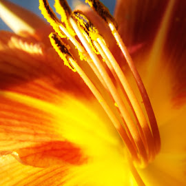 Bees Eye View by Libeth O'Connell - Novices Only Macro ( orange, macro, nature, vivid, stamin, flower )