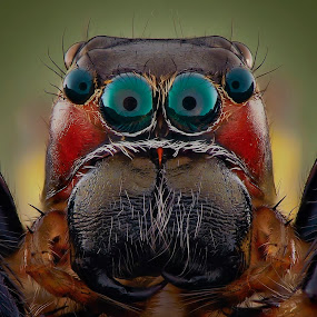 cyan eyes by Rhonny Dayusasono - Animals Insects & Spiders (  )