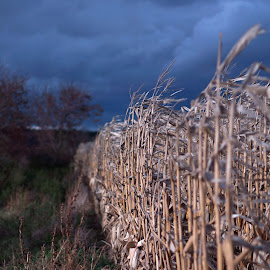 Winter is coming by Luke DeBruin - Nature Up Close Gardens & Produce ( farm, sky, storm, dusk, corn )