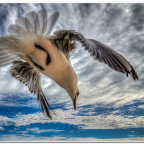 Leaving by Wessel Badenhorst - Animals Birds (  )