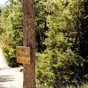 by Denver Pratt - Nature Up Close Trees & Bushes (  )