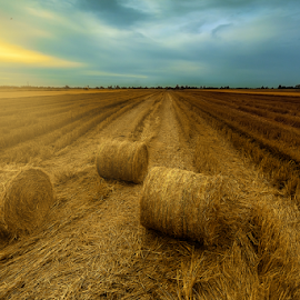 Hay Roll by Kelvin Shutter - Landscapes Prairies, Meadows & Fields
