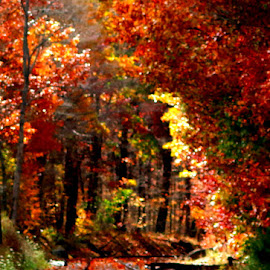 by Jenna Quin - Novices Only Landscapes ( fall, color, colorful, nature )