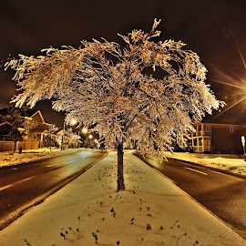 ice storm  by James Heffron - City,  Street & Park  Street Scenes ( ice castle tree,  )