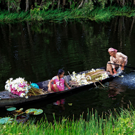 Water lily season by Thảo Nguyễn Đắc - People Family