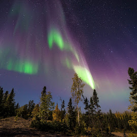 Sky Meets Earth by Serge Skiba - Landscapes Starscapes ( sub, territory, framed, yellowknife, northwest, north, hang, mystic, lights, love, sky, mystical, borealis, spiritual, metal, autumn, territories, coniferous, arctic, office, purple, green, art, aurora, beautiful, canvas, print, northern, color, stars, belt, trees, night, earth )