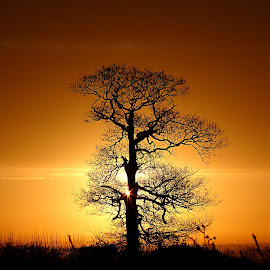 Sunrise by Steve Adams - Landscapes Sunsets & Sunrises ( orange, tree, silhouette, sunset, sunrise )