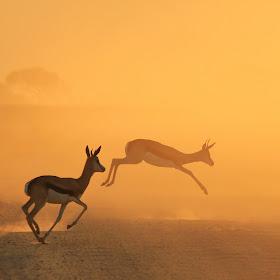 springbok jump great 300 ppi.jpg