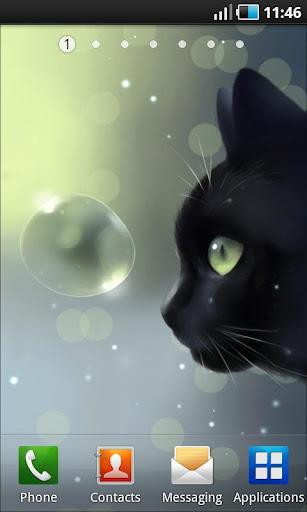 Curious Cat Lite