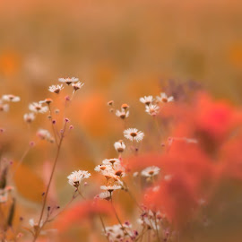 Fall in Love with Fall by Ela B - Nature Up Close Other plants ( wildflower, fall, flowers, fields )