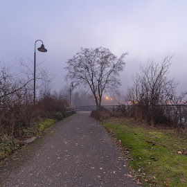 Foggy Path by Jeffery Hayes - City,  Street & Park  City Parks ( tree, park, fog, path, dusk )