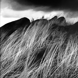 Giant on The Roaches by Guy Evans - Landscapes Weather ( grass, movement, weather, landscape )