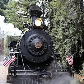 Skunk Train by Fran Juhasz-Mckitrick - Transportation Trains (  )