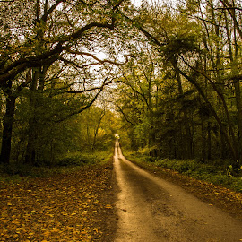 Autumn Lane by Gill Kennett - Landscapes Forests ( lincolnshire, autumn, path, trees, wolds, forest, woods, lane )
