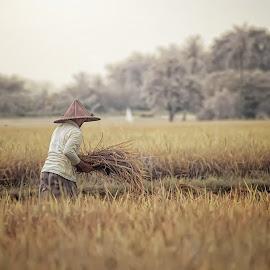 by Deny Prasetiyo - Landscapes Prairies, Meadows & Fields