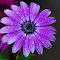aIMG_7041_cr.jpg