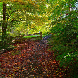 Early Autumn by Carl Testo - Landscapes Forests ( hcl, color, autumn, forest, leaves )