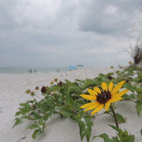 Beach Flower by William Rhodes - Flowers Single Flower ( sky, beach, flower )