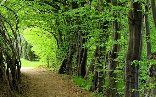 картинки на рабочий стол лето природа лес № 489025 без смс