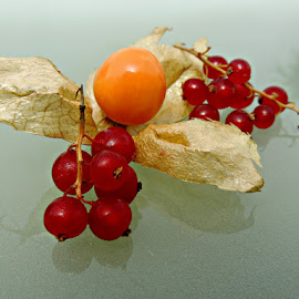 Cape Gooseberry and Red Currants by Tamsin Carlisle - Food & Drink Fruits & Vegetables ( physalis peruviana, orange, arrangement, fruit, red, still life, glass, red currants, cape gooseberry, berries,  )
