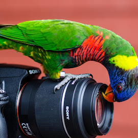 Selfie by Kenny Mccall - Animals Birds ( zoo, travel, ken mccall, birds, shelfie )