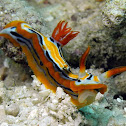 Chromodorid Nudibranch