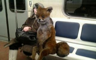 Screenshot of Stoned Fox: Internet Meme Make