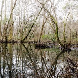 Foggy swamp  by Trey Walker - Novices Only Landscapes ( fog, d7000, alabama, nikon, swamp )