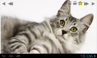 Screenshot of Cute Cats Gallery Wallpapers 2