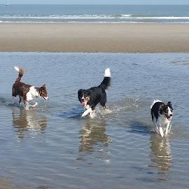 plezier  by Jen Jenny - Animals - Dogs Playing