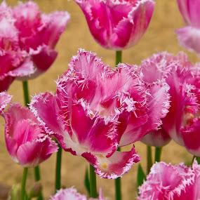 by Don Saddler - Flowers Flower Gardens (  )