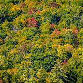 Early Kearsarge Foliage by Joel Provost - Abstract Patterns ( mount kearsage, andover nh, autumn, foliage, fall, andover, new hampshire, september )