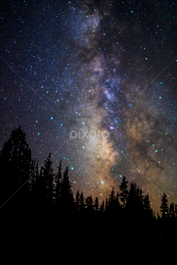 Alpine Milky Way by Trevor Hales - Landscapes Starscapes ( stars, space, universe, tree tops, milky way,  )