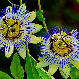 by Nikša Šapro - Flowers Flowers in the Wild