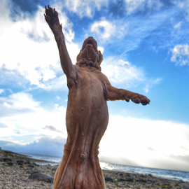 FIVE.HIGH  by Michael Sweeney - Animals - Dogs Playing ( five high . sharpei. scotland .beach . dog )