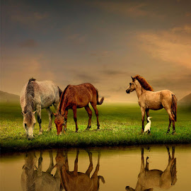 by Daniel Chang - Animals Horses