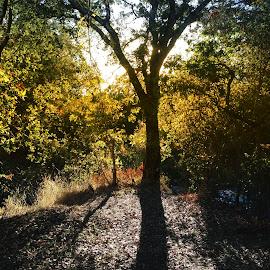 golden sunset by Leslie Hunziker - Landscapes Prairies, Meadows & Fields ( nature, sunset, creek, fall, plants, trees, shadows )