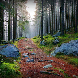 Path through the forest by Mark  Gregg - Landscapes Forests ( path, nature, landscape )