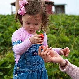 Fresh by Craig Sheridan - Babies & Children Toddlers ( strawberry )