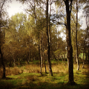 Woods by Alina Jumabhoy - Instagram & Mobile iPhone ( nature, trees, forest, landscape, woods )