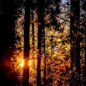 Light Thru the Trees by RomanDA Photography - Landscapes Sunsets & Sunrises ( tree, sunrise )