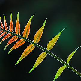by Nikša Šapro - Nature Up Close Leaves & Grasses