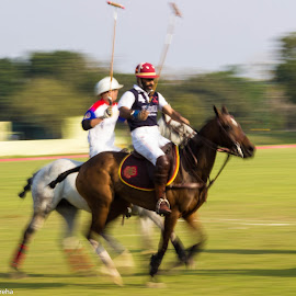 Polo by Avanish Dureha - Sports & Fitness Other Sports ( horse, polo, equestrian )