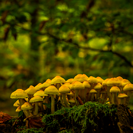 The fungi group by Peter Samuelsson - Nature Up Close Mushrooms & Fungi