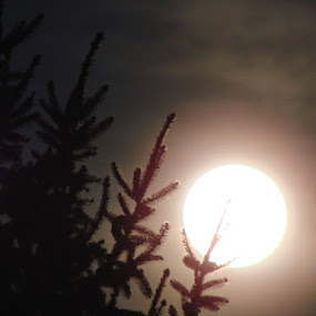 Pine Tree and the Moon by Nat Bolfan-Stosic - Nature Up Close Other Natural Objects ( moon, village, tree, night, pine,  )